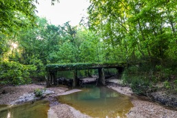 mississippi bridge creek creekbed tree hardwood forest