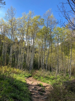 twin peaks wilderness area aspen trees wasatch national forest utah hiking camping