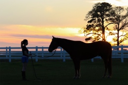 horse training teacher student AQHA sunset magnolia texas