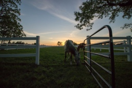 country sunset texas horses AQHA pasture fence gate wide angle