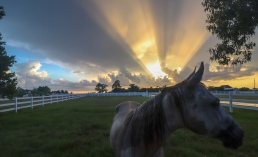 horse sunset texas weather storm landscape